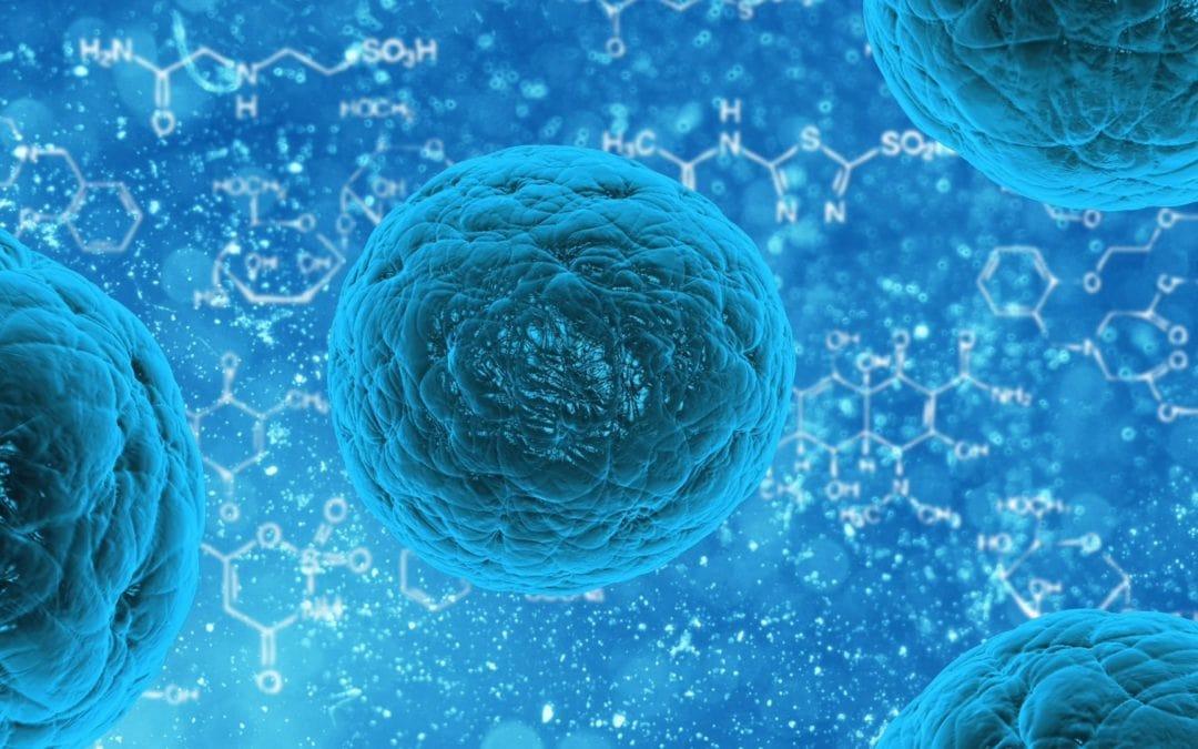 verbeter je immuunsysteem met hulp van je microbioom door leefstijl coaching van movinforce