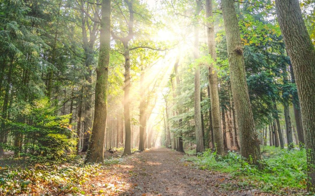 Hoe verhoog je je weerstand met zon, voeding en natuur?